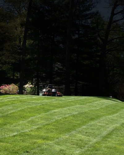Odd Jobbers earns their stripes lawn mowing
